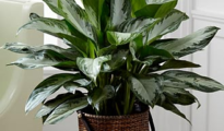 5 Easy to Grow Houseplants