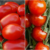 What is the Difference Between Grape Tomatoes and Cherry Tomatoes?