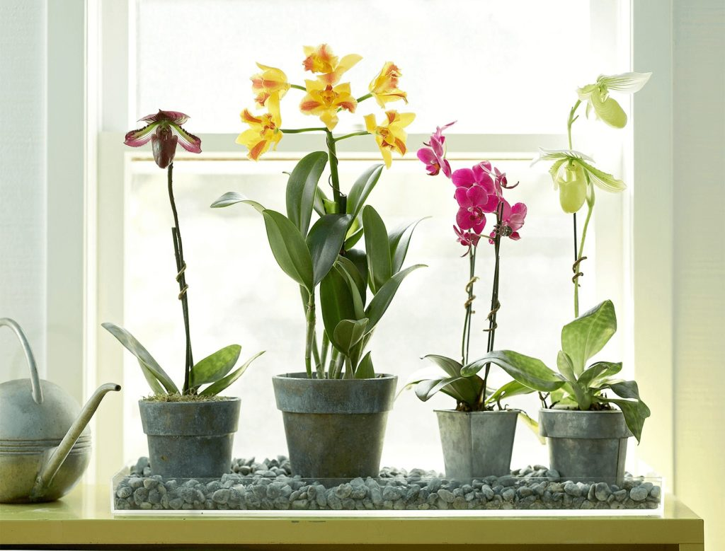 orchids pet friendly houseplants