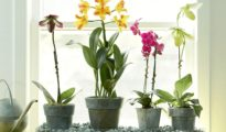 How to Fertilize Orchids
