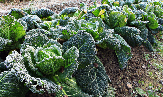 14 Vegetables to Grow in Winter