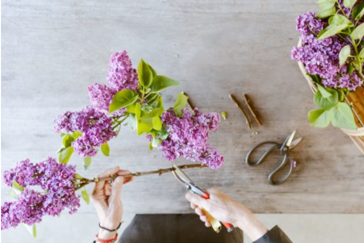 how to cut flowers
