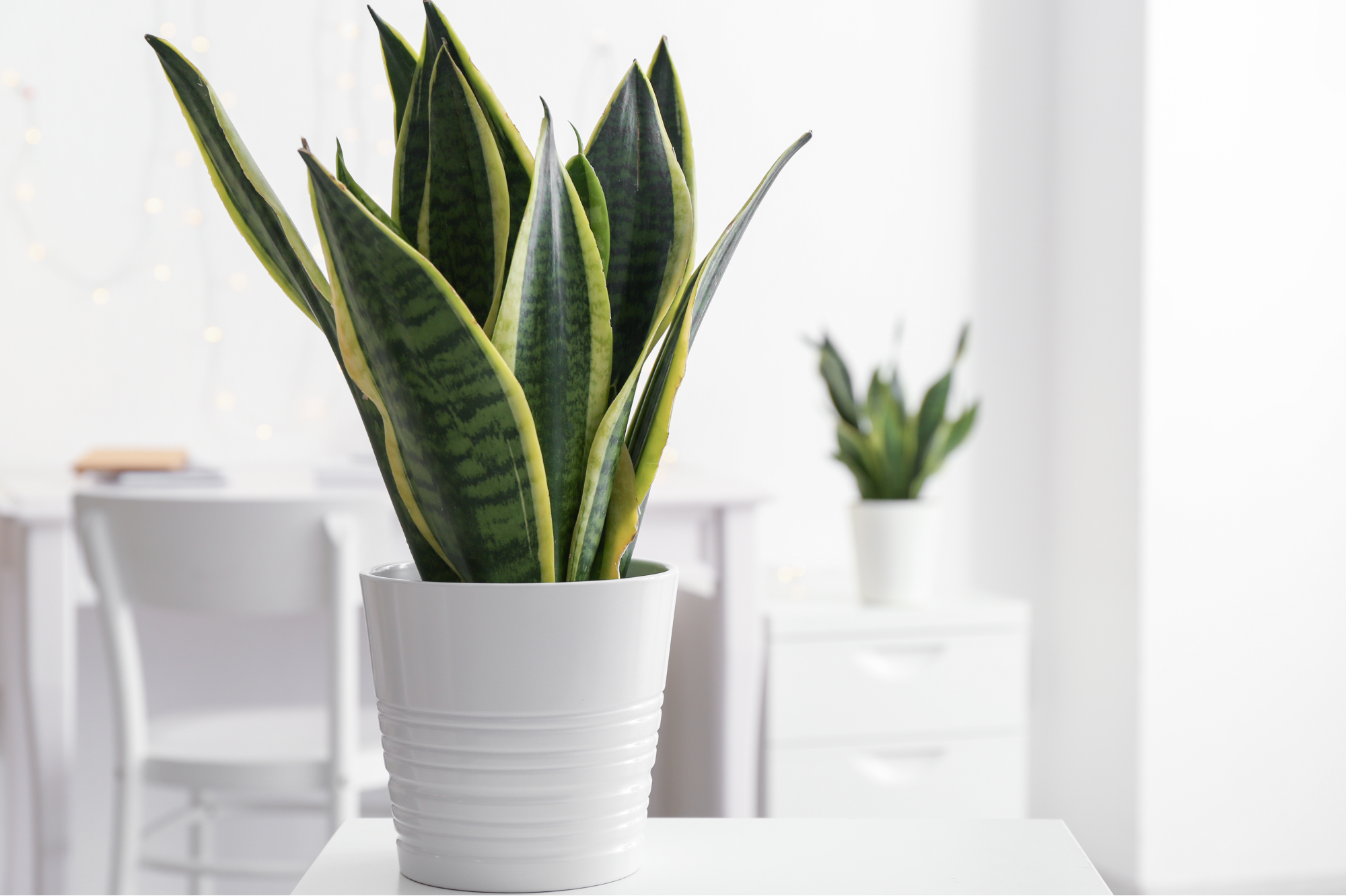 The Benefits of Plants in the Office
